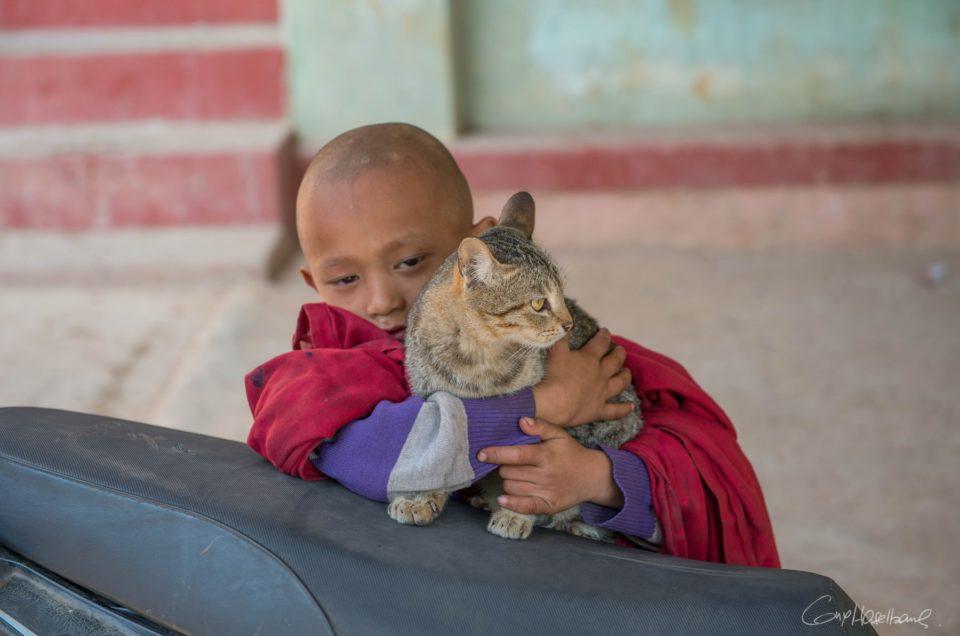 Le chat du monastère de Hsipaw*.