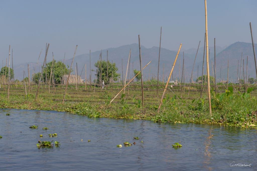 Birmanie16-2167