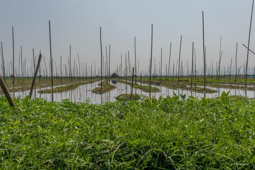 Birmanie16-2183