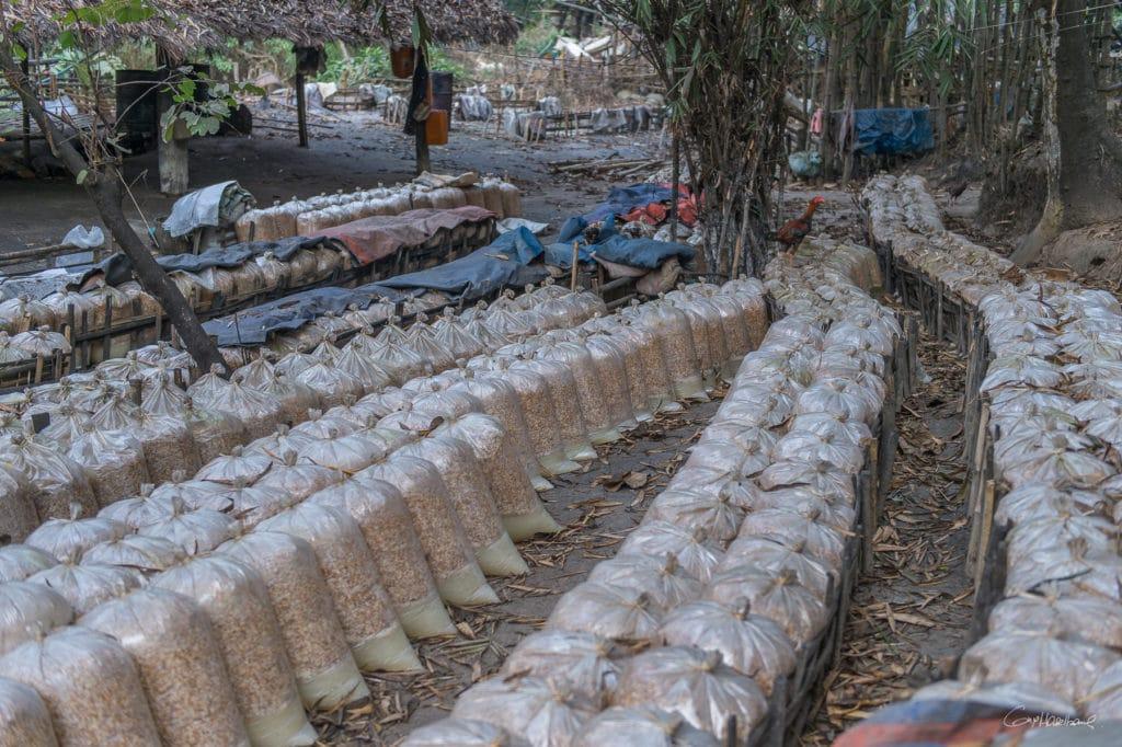 Birmanie16-2634