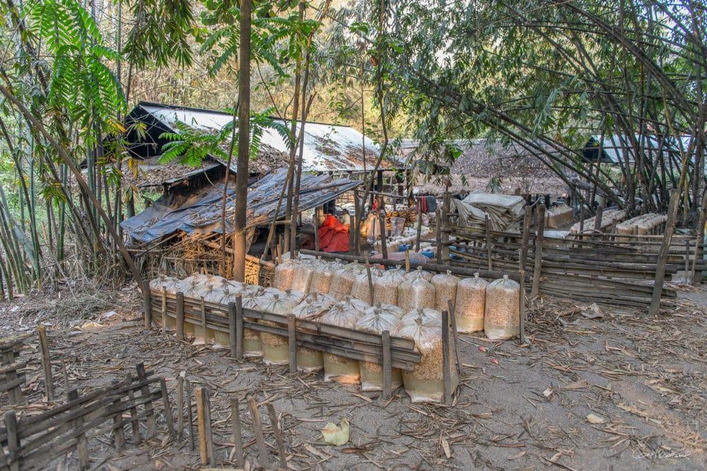 Birmanie16-2639
