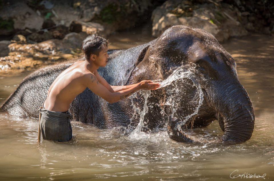 Retraite pour éléphants.